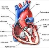راهنمای پیشگیری و درمان بیماری اندوکاردیت یا عفونت قلب