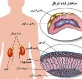 راهنمای کامل درمان گیاهی بیماری ادیسون