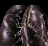 راهنمای بیماری آزبستوز به همراه راههای پیشگیری
