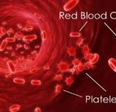 پر خونی یا پلی سیتمی ورا / درمان غلظت خون با داروهای گیاهی
