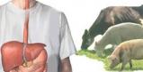 راهنمای جامع درمان تب مالت در طب سنتی و طب مدرن