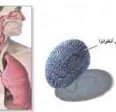 راههای پیشگیری و درمان بیماری آنفلوانزای مرغی