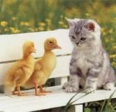 لحظه های خنده دار با حیوانات