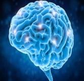 امواج فراصوتی در مغز به طور مستقیم با هوشیاری مرتبط است