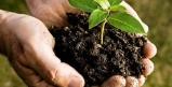 افزایش کیفیت محصولات کشاورزی با کودهای زیستی/ عدم ایجاد آلودگی