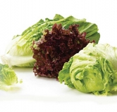 سالاد ساده و خوشمزه سبز با سس فرانسوی